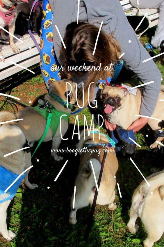 Boogie went to summer camp! We spent a weekend at Pug Camp in Pennsylvania to have some pug fun while living the pug life.