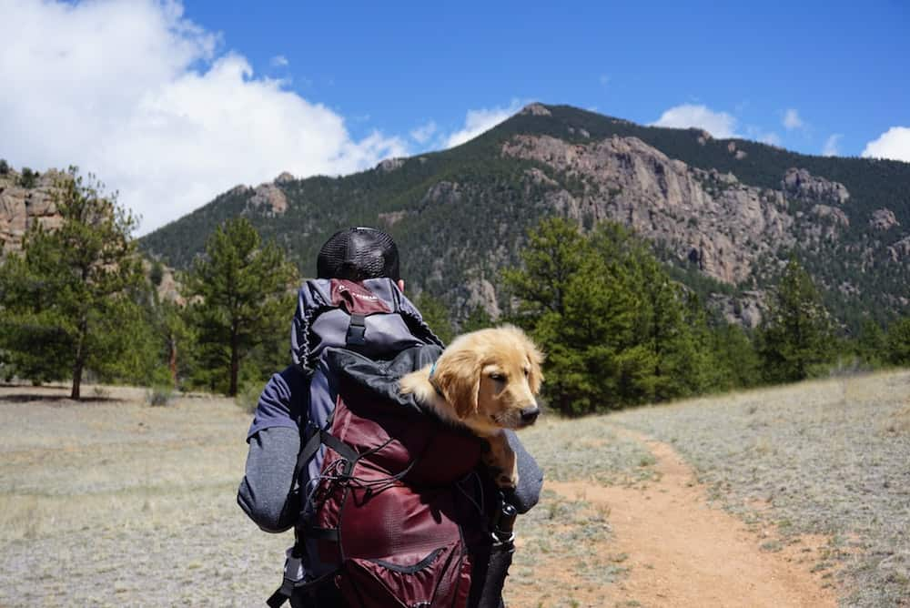 Today more than ever, people are bringing their dogs along on family trips. It's the best! Here are 10 reasons to travel with your dog.