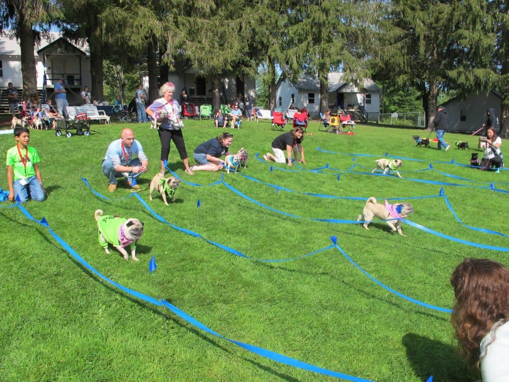 Pug Events Around the World