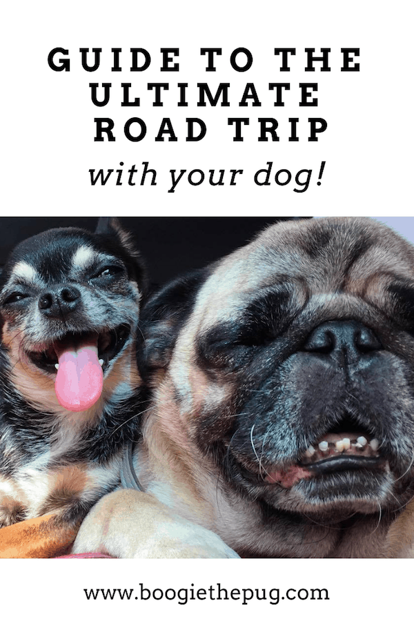 The great American road trip just got better! Your dog is coming along for the ride.