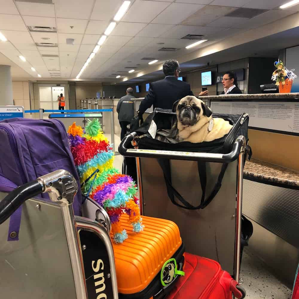 Flying with your dog can be both exciting, and overwhelming. Here are a few tips to use on flight day that will help you both stay calm and happy.