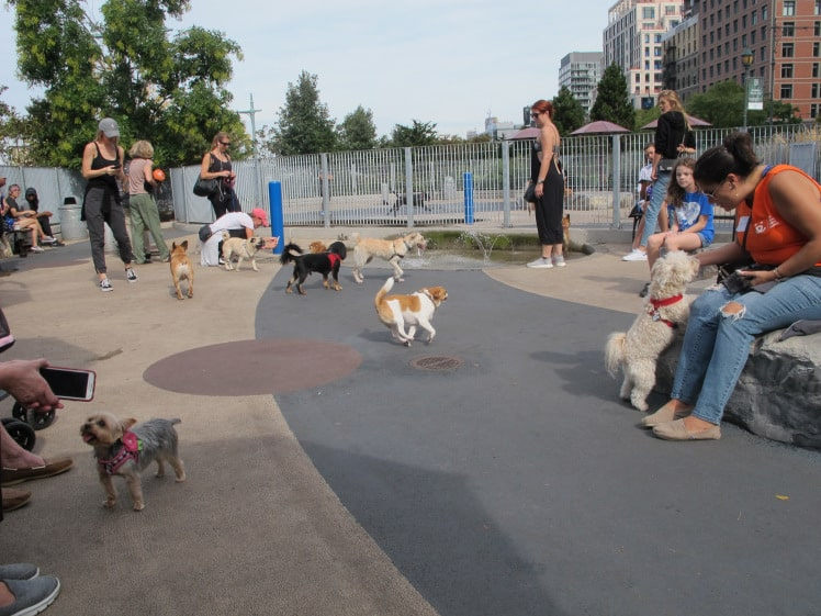 Small dog park in Tribeca.