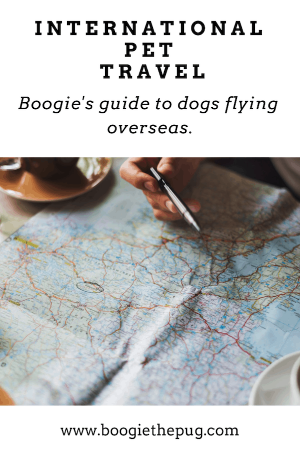 Flying internationally with your dog? Check out our guide and make sure you're prepared!