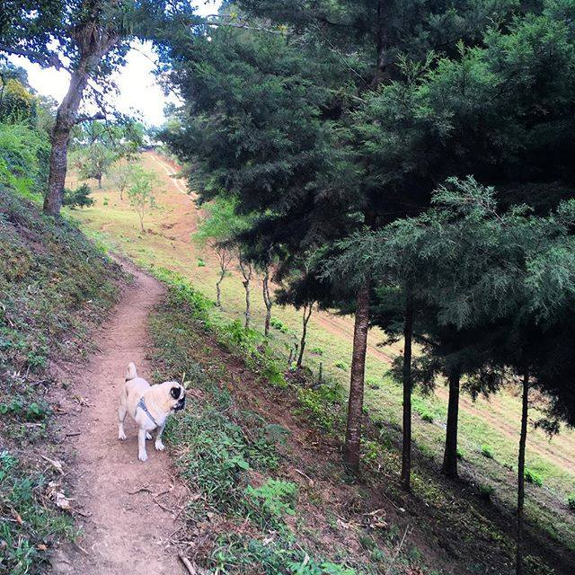 A dog on a hike in the Guatemalan countryside.