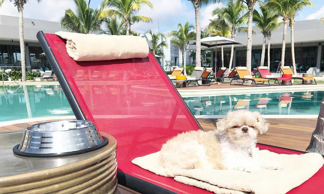 A dog lounges on a pool lounge by a pool.