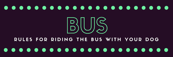 a title card saying bus