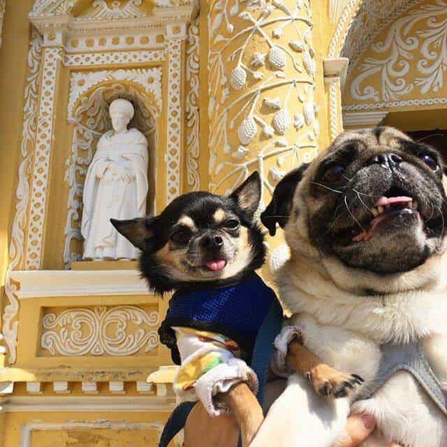 Two dogs in front of La Merced Church in Guatemala.