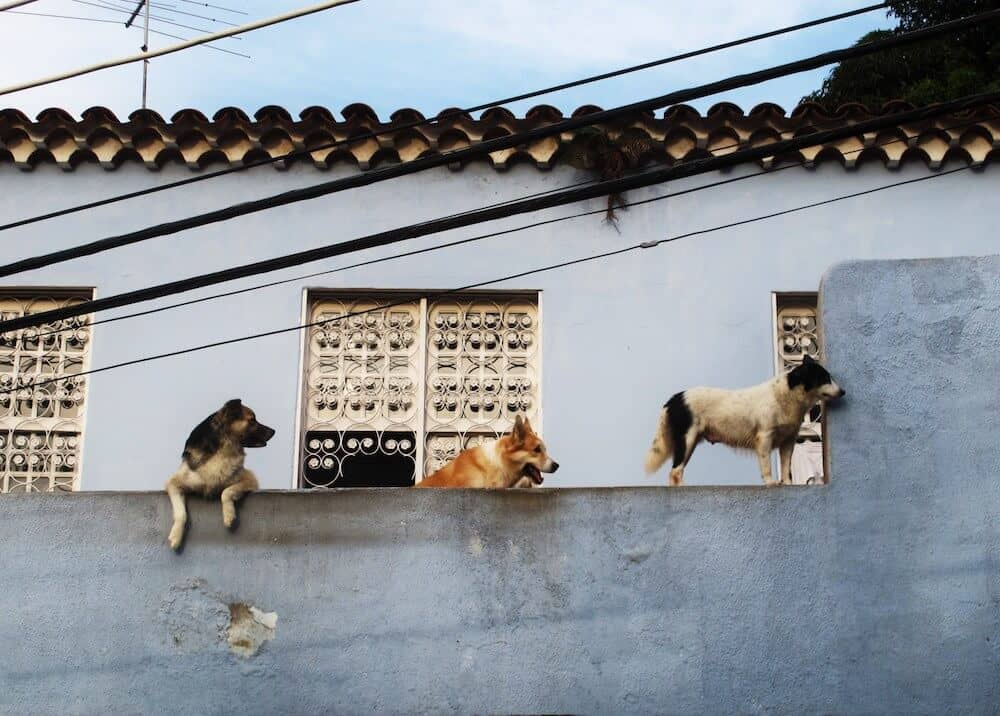 Three dogs on a roof in Rio de Janeiro.