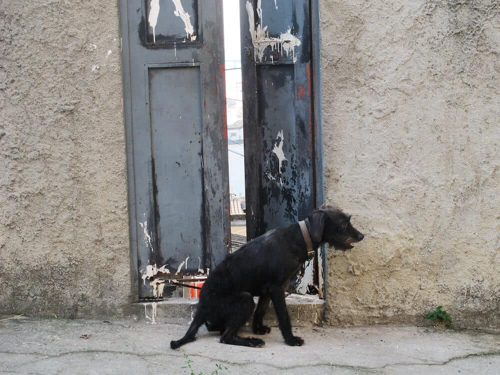 A black dog sitting in front of a door.