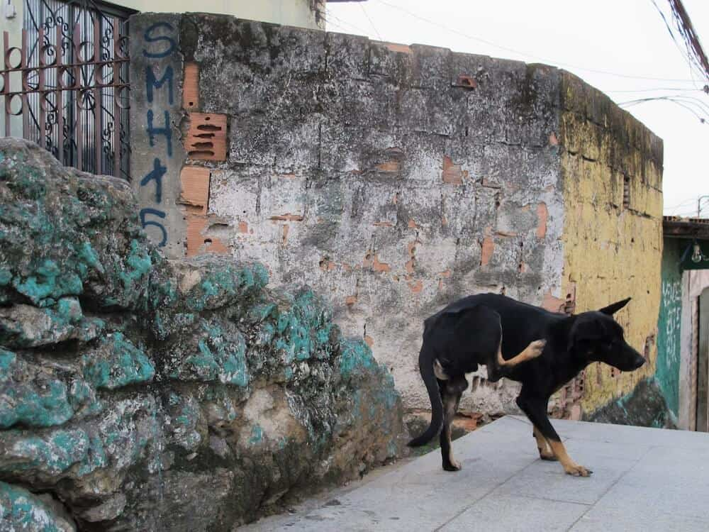 A dog scratching his ear in a favela.