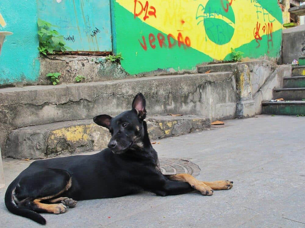 A dog sitting near the Brazilian flag.