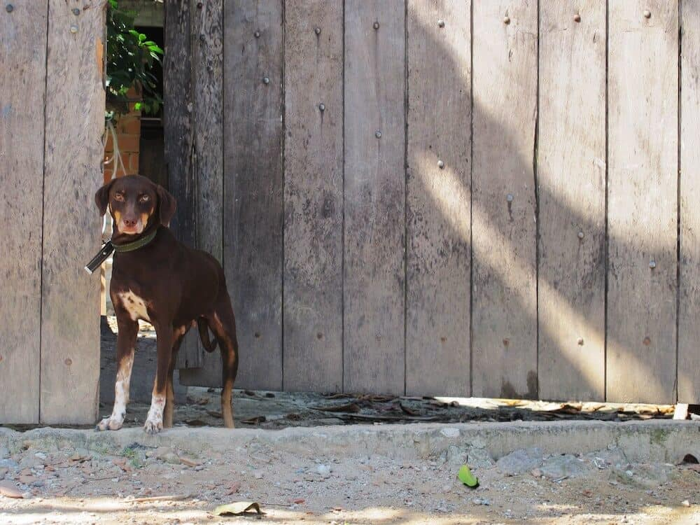 A brown dog outside in front of a door.