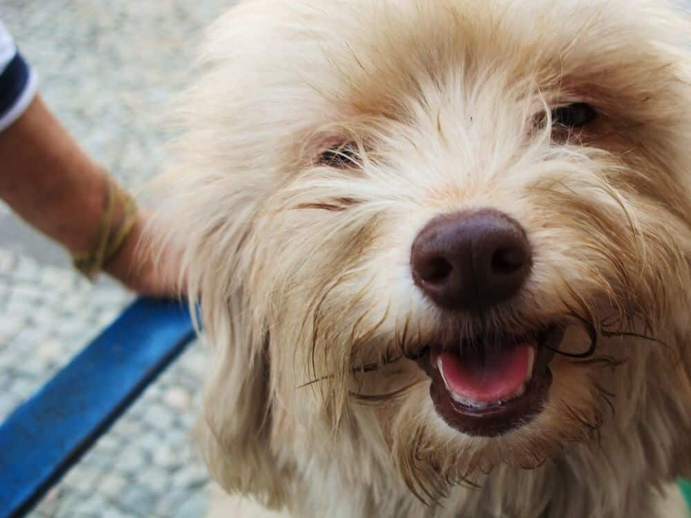 A smiling dog face.
