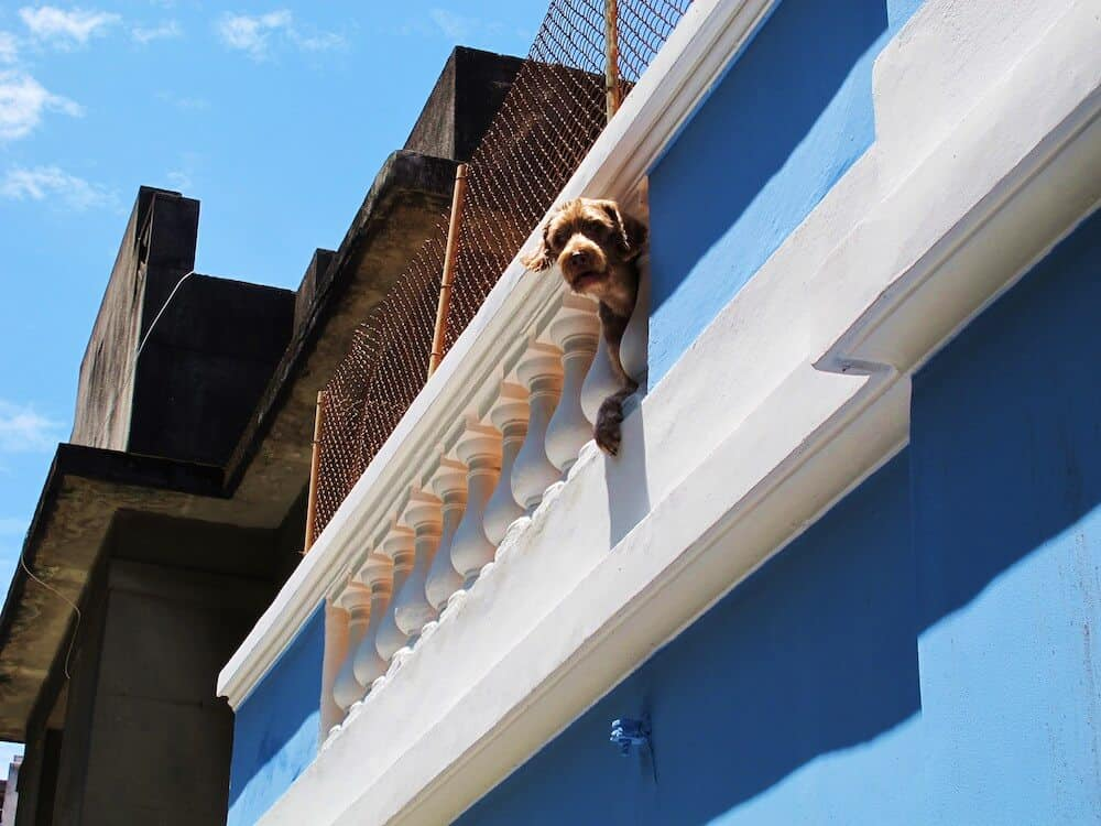 A dog with his head sticking out of a house roof in Rio de Janeiro.