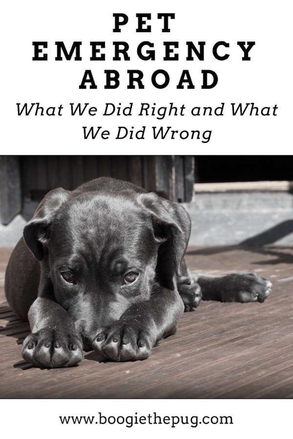 On a trip abroad, we experienced a pet emergency when our two dogs swallowed some harmful vitamins. Here's a breakdown of what we did right, and what we definitely did wrong.