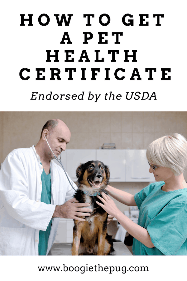 If you're in the USA and planning to travel internationally with your pup, chances are you'll need a pet health certificate that is endorsed by the USDA. Here's how to get one, so you and your pooch can travel abroad.