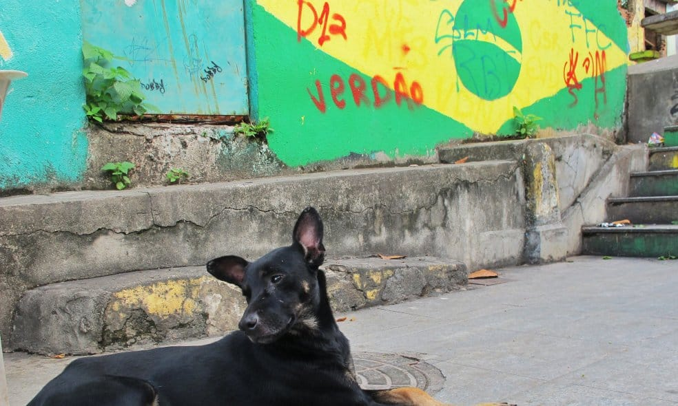 A dog sitting in front of graffiti of the Brazilian flag.