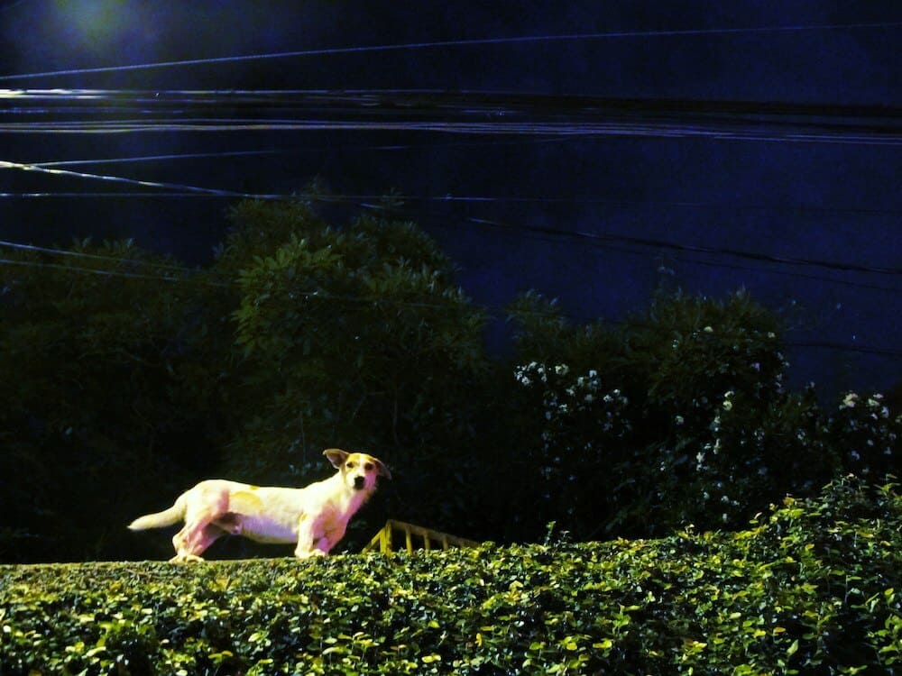 A dog at night on a roof.
