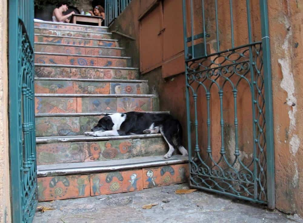 A dog asleep on restaurant steps.