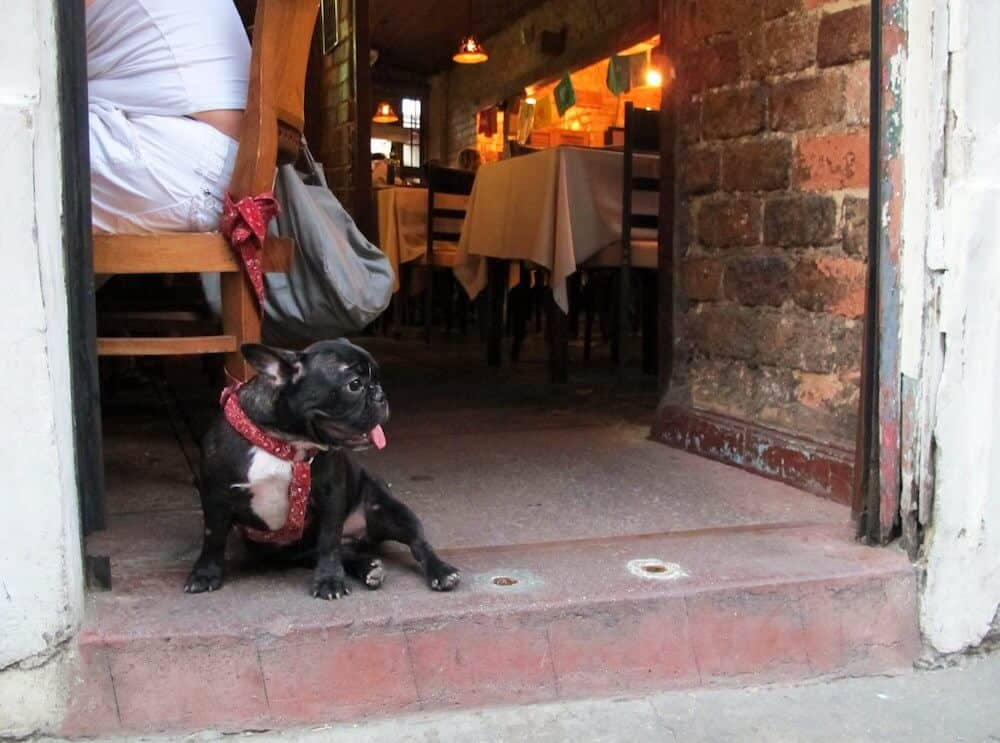 A Frenchie sitting outside of a restaurant.