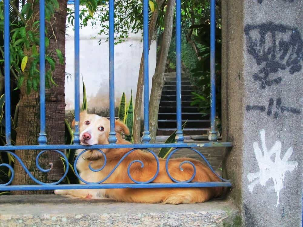 A dog resting his head on a gate.
