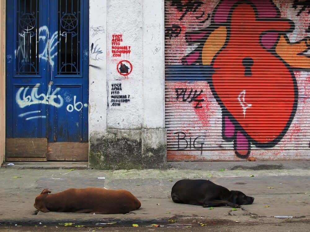 Two dogs sleeping in front of graffiti.