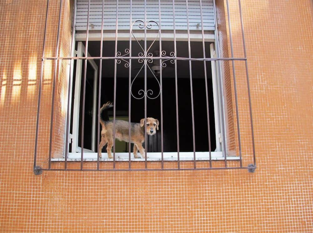 A dog walking in a window pane.