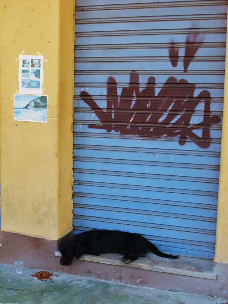 A dog sleeping in a doorway.