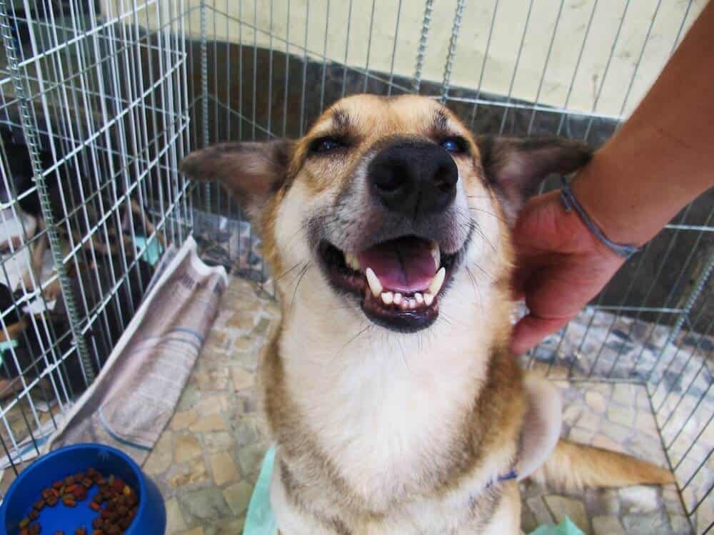 A smiling dog that's up for adoption.