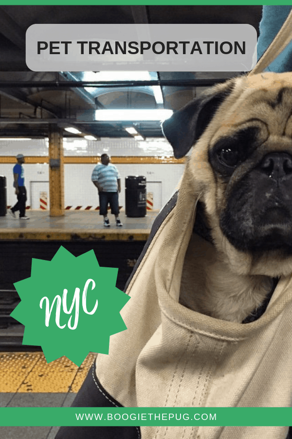 Visiting NYC? Here are all the modes of public transportation you can travel on with your dog.