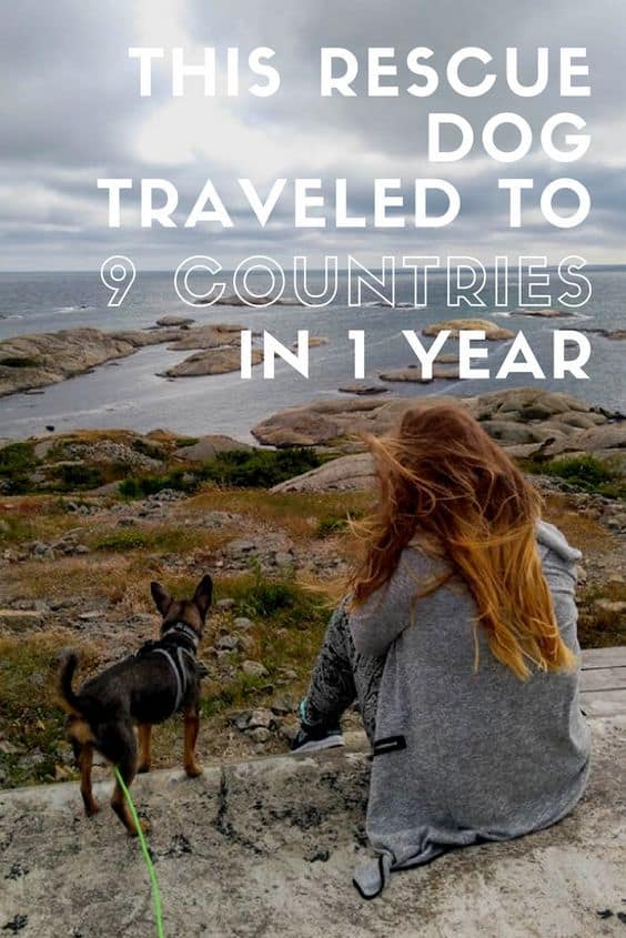 Fabio the rescue dog traveled to nine countries in under a year! His family explains how he adapted to their lifestyle, what surprised them most about their trips, and which dog park in Europe is a must see!