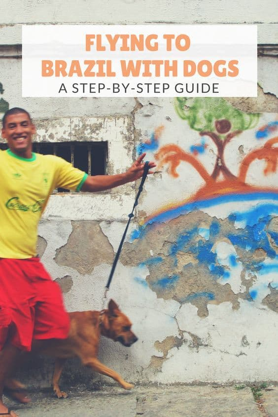 We spent six weeks in Rio de Janeiro with our dogs, and can't wait to return. Here's a step by step guide to flying to Brazil with dogs, so you can visit too.