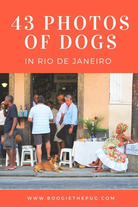 Rio is incredibly dog friendly, and jam packed with pet stores, groomers, and dog meet ups. The city explodes with color and culture, making a visit any time of year super fun for two legged and four legged travelers alike. Here are 43 fun photos of dogs in Rio de Janeiro. Enjoy!