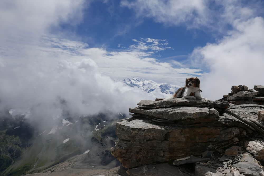 A dog posing on the French Alps.