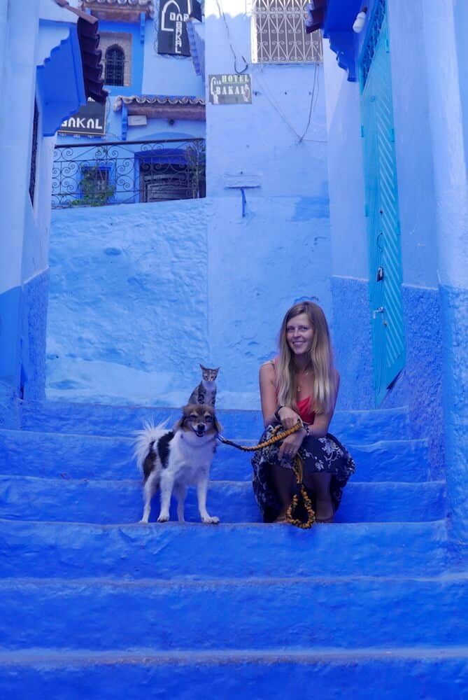 A dog, his owner, and a stray cat sit on blue steps in Morocco.
