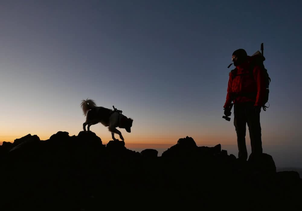 A dog and his owner climbing a mountain at sunset.