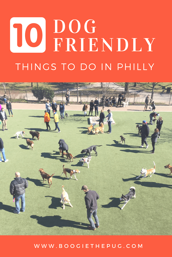 Who knew that the city of brotherly love had gone to the dogs? Just a quick two hours from New York City, Philly is a dog lovers dream. Here are 10 dog friendly things to do in Philadelphia.