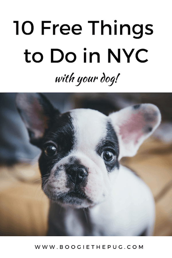 10 Free Things to Do in NYC With Your Dog