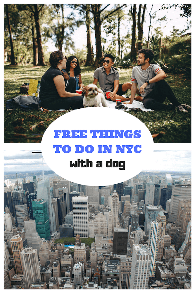 A Pinterest Cover with a group hanging out with a dog and a view of the New York City skyline.