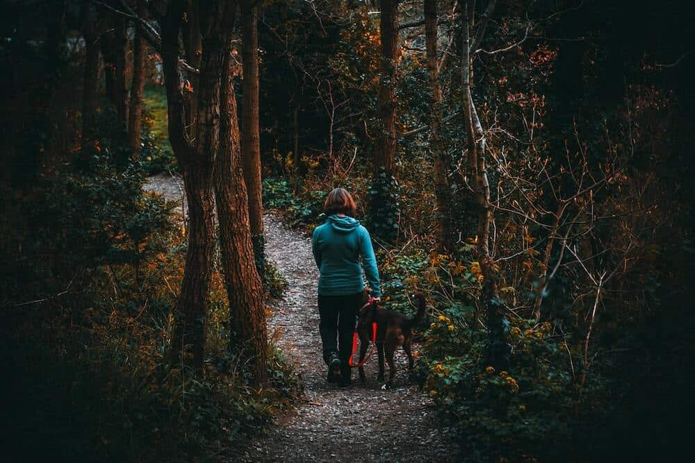 A woman walks her dog through the woods.