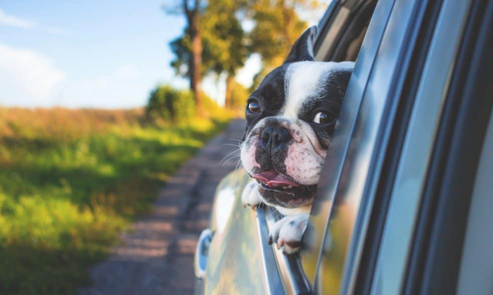 A dog smiles in a car window.