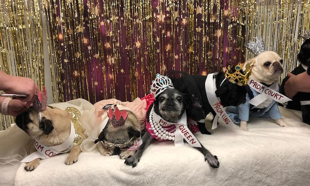 Pug Prom 2018