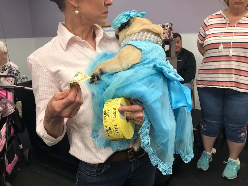 A pug in a blue dress is held by her human mother.