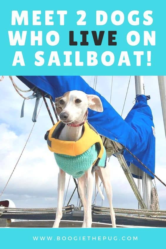 Dogs Penny and Mondo live full time on a sailboat with their two humans. Learn about how these two Texan dogs got their sea legs and how their humans learned all about sailing with dogs.