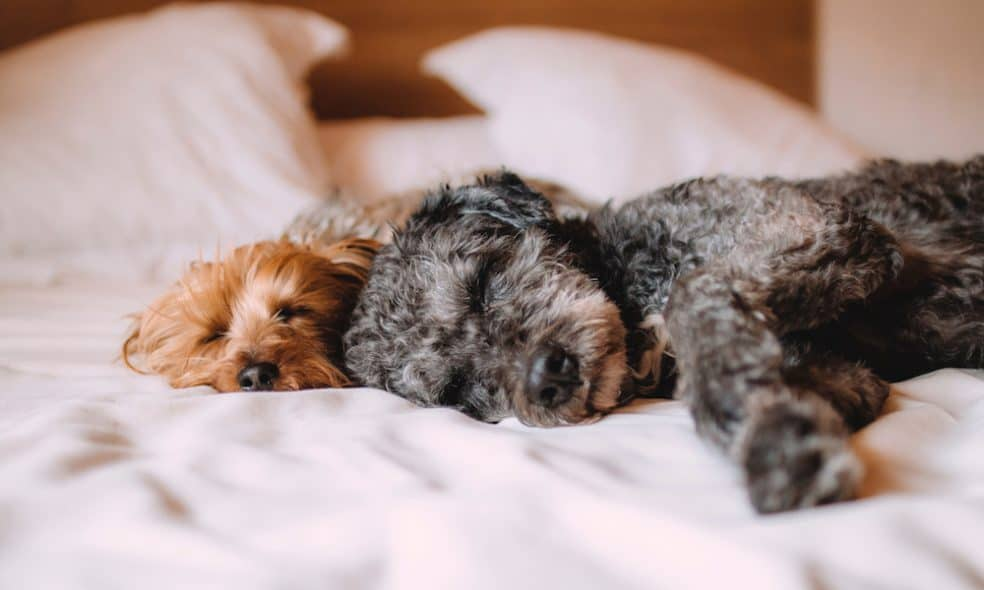 Coming to the big apple? Bring your pooch along! Here's a list of dog-friendly hotels in NYC that will welcome and pamper your pooch.