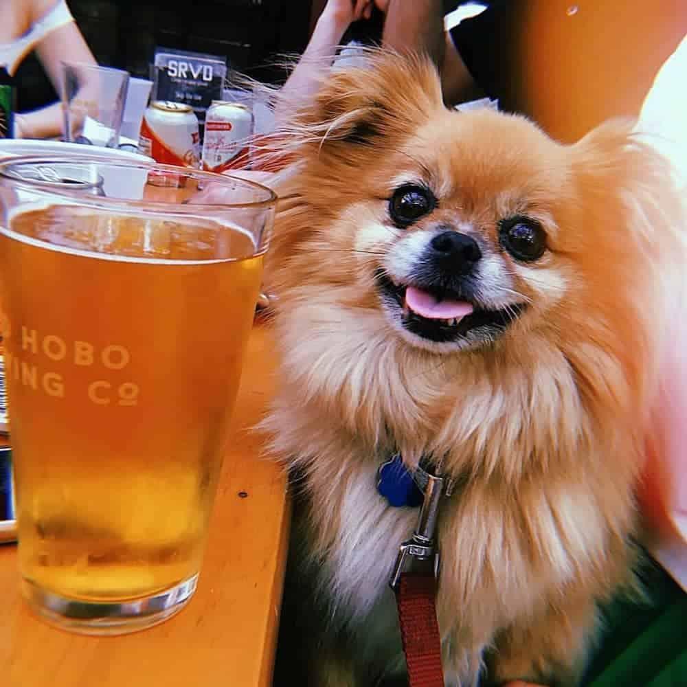Dog friendly nyc bar crawl.