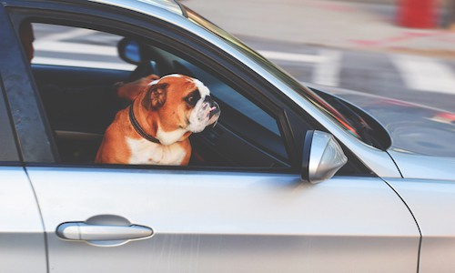 Guide to the Ultimate Road Trip with your Dog