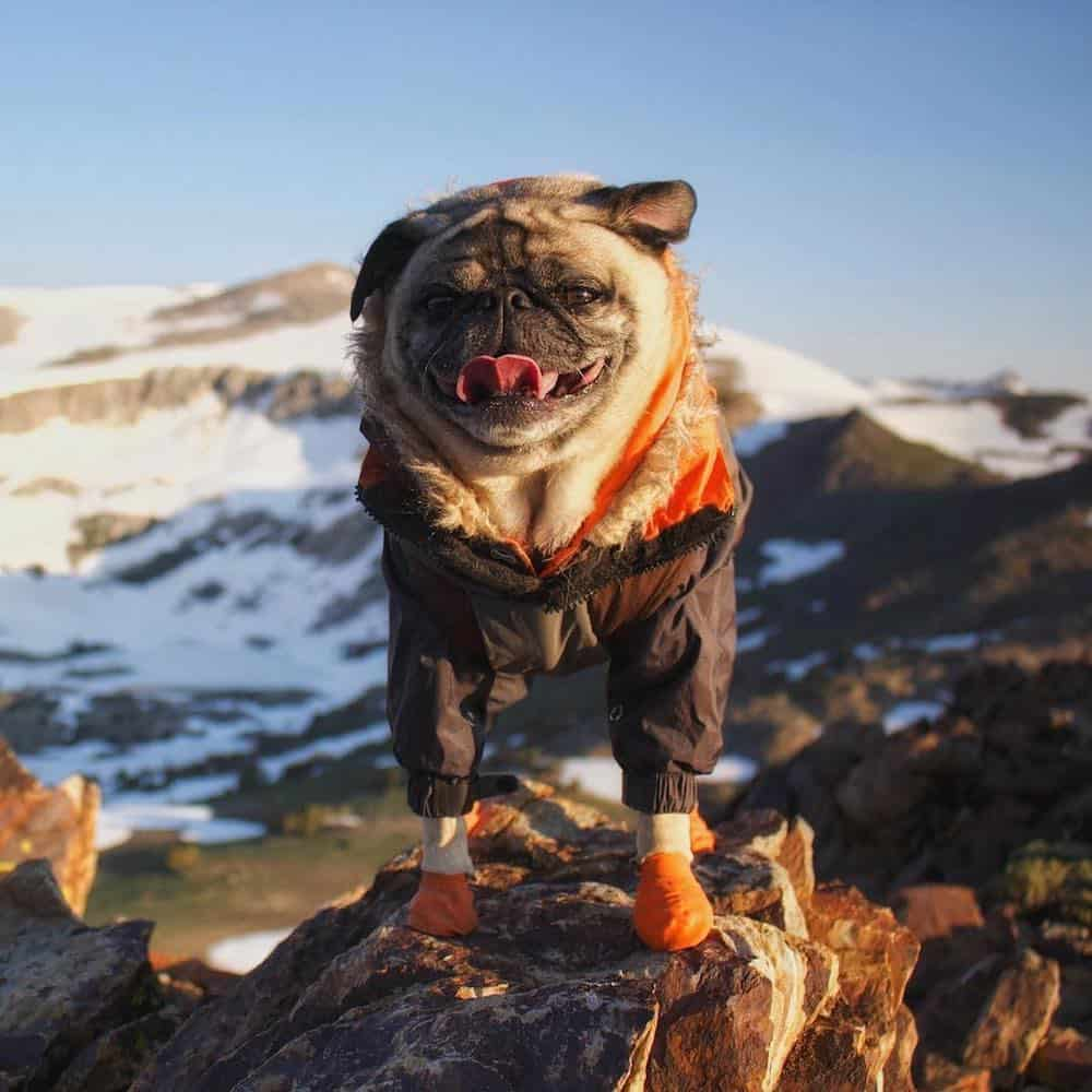 An Interview with Mack the Adventure Pug
