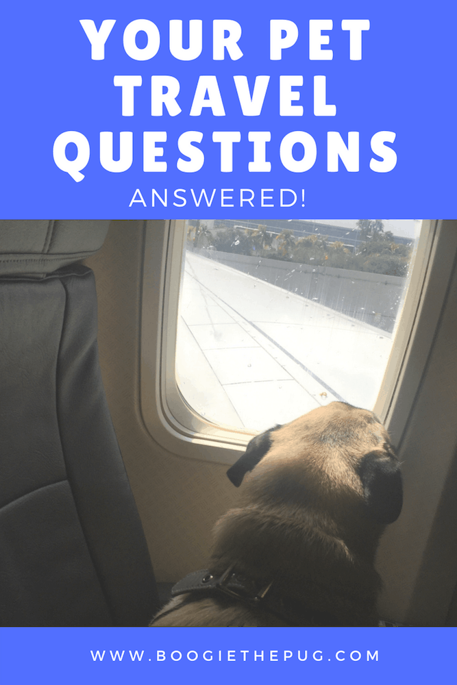 You asked, and we answered! Here are your biggest dog travel questions, answered by us. Have more questions? Leave them in the comments.