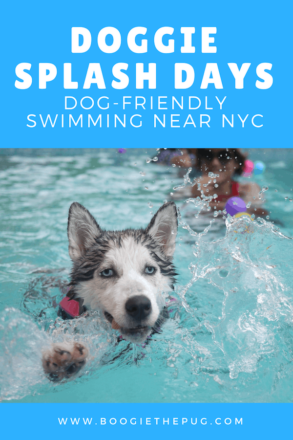 Doggie Splash days are when pools or waterparks allow dogs to come for a day or two to enjoy the water before it's drained. Head to one and beat the heat with your pup.